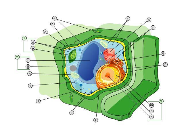 sel tumbuhan lebih kuat dan lebih kaku dibanding sel hewan karena sel tumbuhan memiliki