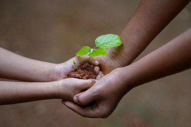 mengapa kita harus menanam pohon